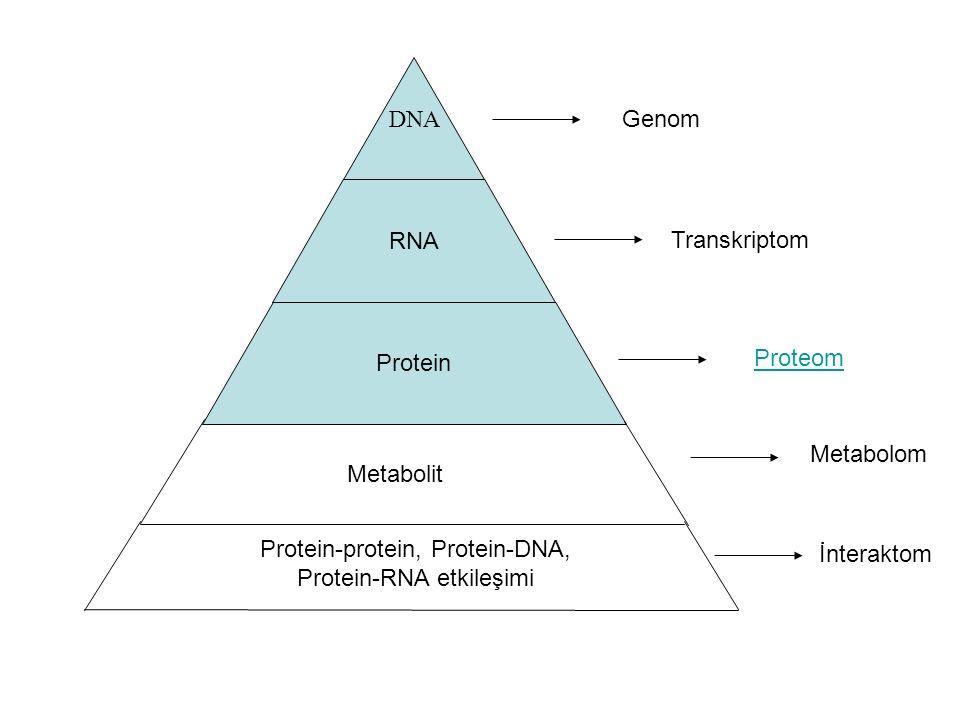 DNA RNA Protein Metabolit Protein-protein, Protein-DNA, Protein-RNA etkileşimi Genom Transkriptom Proteom Metabolom İnteraktom