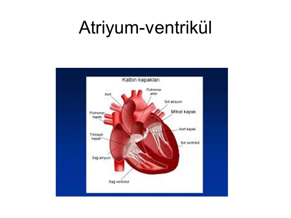 Atriyum-ventrikül