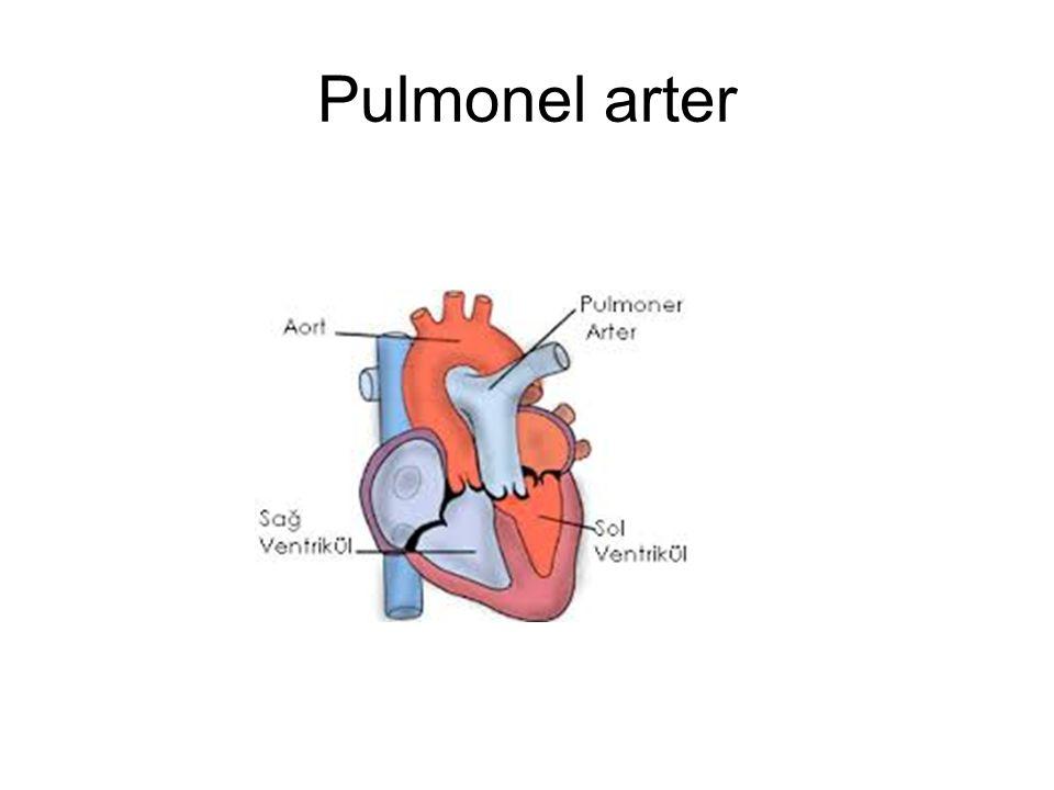 Pulmonel arter
