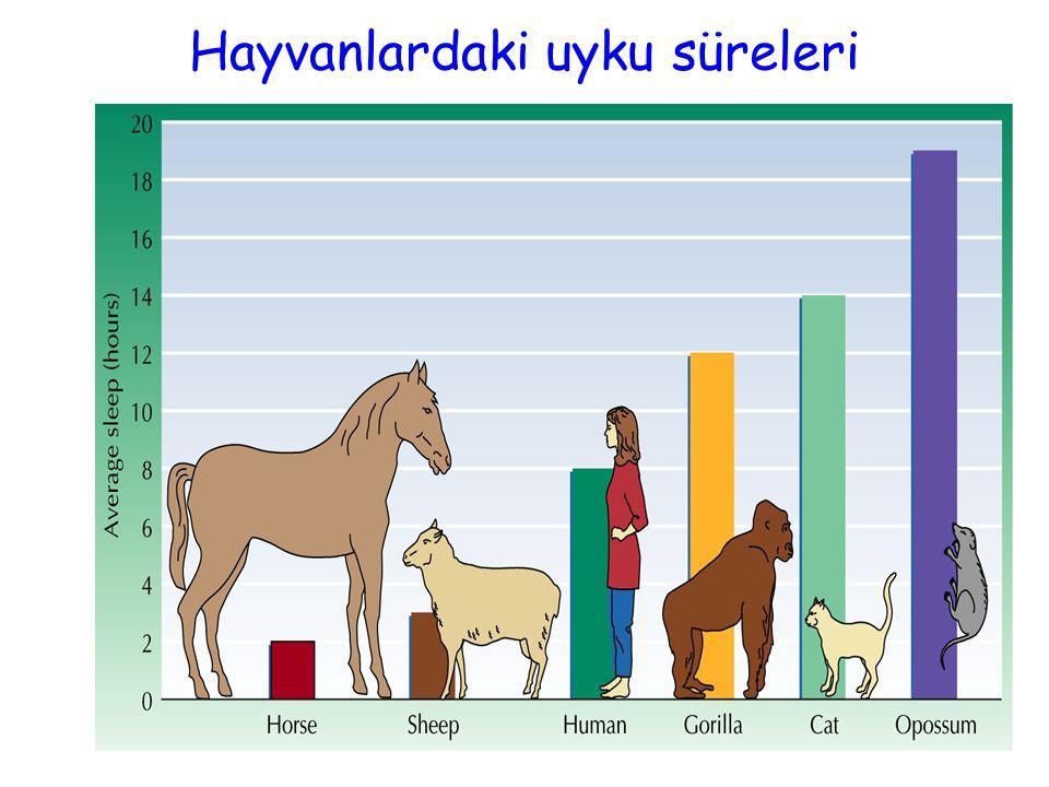 Hayvanlardaki uyku süreleri