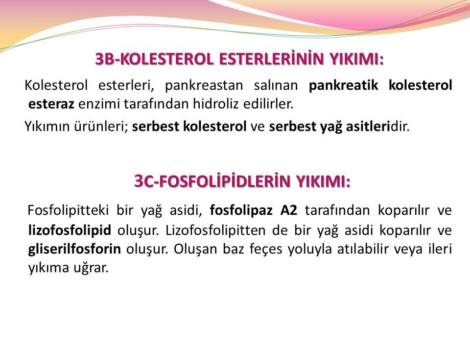 3B-KOLESTEROL ESTERLERİNİN YIKIMI: Kolesterol esterleri, pankreastan salınan pankreatik kolesterol esteraz enzimi tarafından hidroliz edilirler. Yıkım