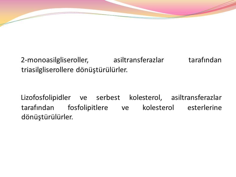 2-monoasilgliseroller, asiltransferazlar tarafından triasilgliserollere dönüştürülürler. Lizofosfolipidler ve serbest kolesterol, asiltransferazlar ta
