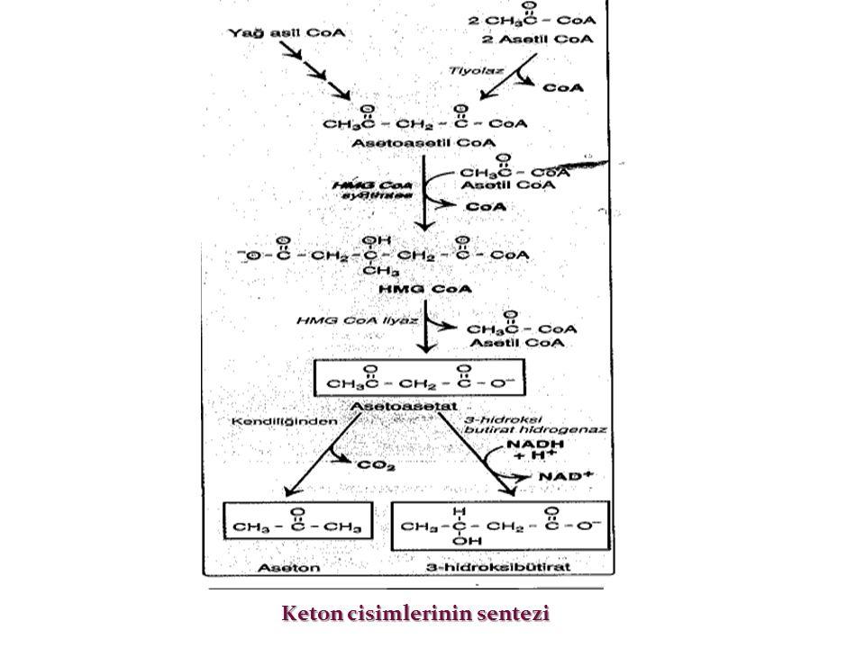 Keton cisimlerinin sentezi Keton cisimlerinin sentezi