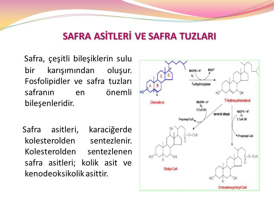 SAFRA ASİTLERİ VE SAFRA TUZLARI Safra, çeşitli bileşiklerin sulu bir karışımından oluşur. Fosfolipidler ve safra tuzları safranın en önemli bileşenler
