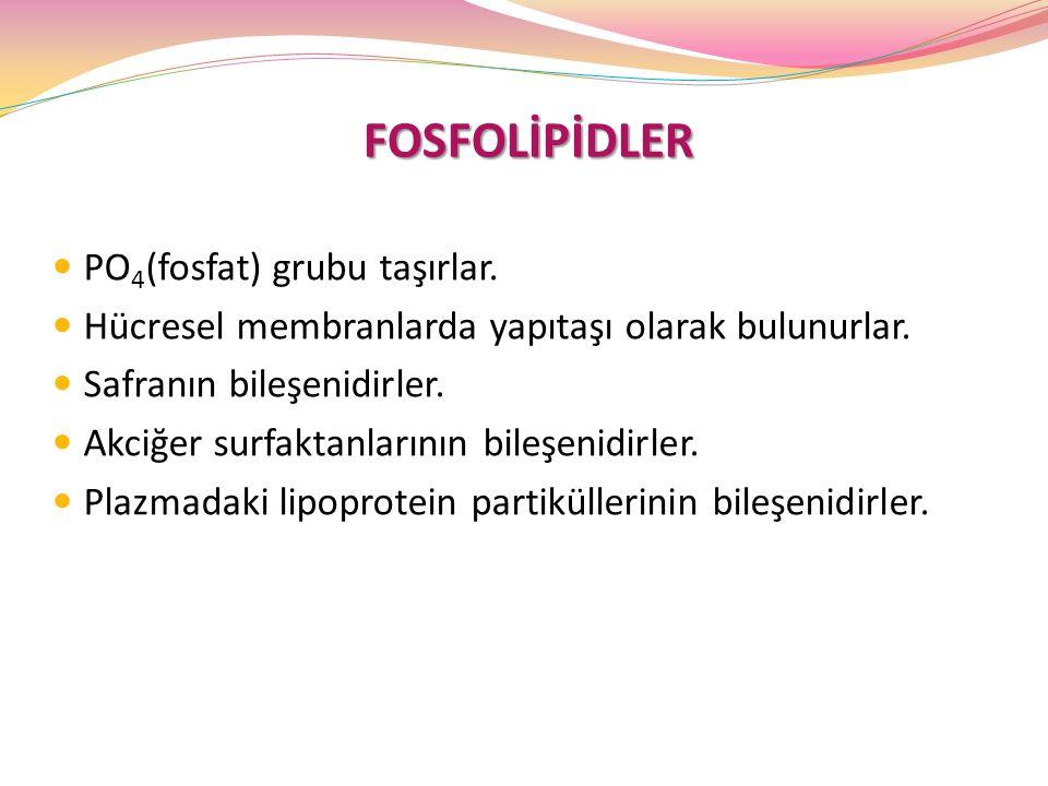 FOSFOLİPİDLER FOSFOLİPİDLER PO 4 (fosfat) grubu taşırlar. Hücresel membranlarda yapıtaşı olarak bulunurlar. Safranın bileşenidirler. Akciğer surfaktan
