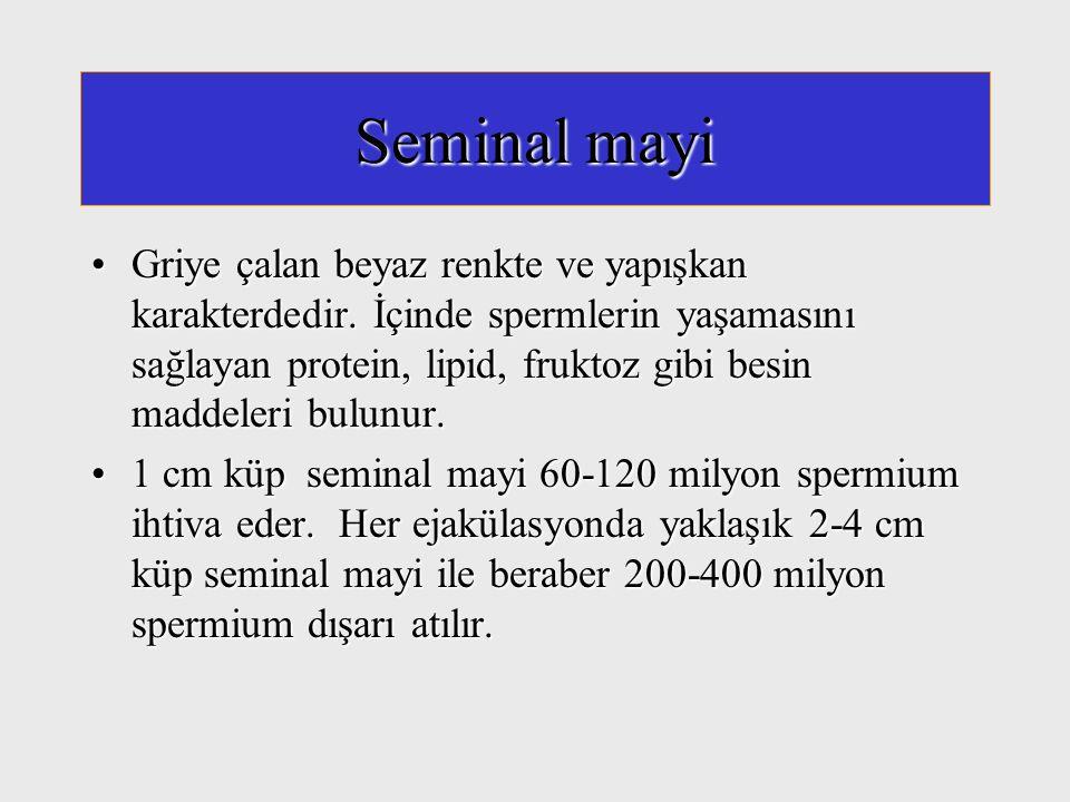 Seminal mayi Griye çalan beyaz renkte ve yapışkan karakterdedir. İçinde spermlerin yaşamasını sağlayan protein, lipid, fruktoz gibi besin maddeleri bu