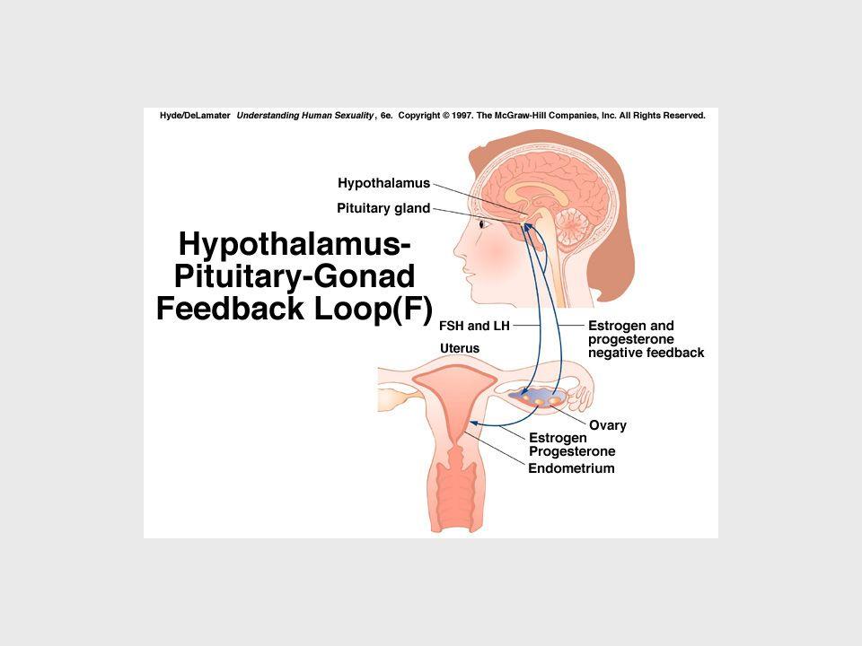 Hipofiz ön lobundan salgılanan ve overleri etkiliyen GTH'lar, hipotalamustan salgılanan GnRH tarafından kontrol edilir.