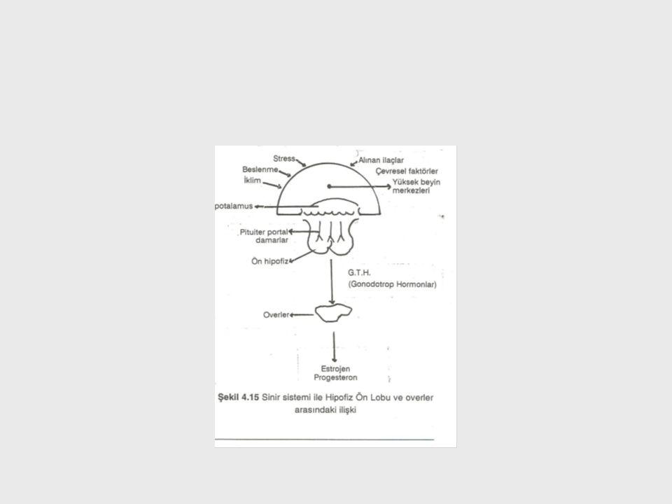Hipofiz önlobundan salgılanan GTH'lar:.FSH: Erkekte spermatogenezisin olaylanmasında rol oynar.