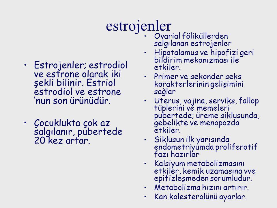 estrojenler Estrojenler; estrodiol ve estrone olarak iki şekli bilinir. Estriol estrodiol ve estrone 'nun son ürünüdür. Çocuklukta çok az salgılanır,