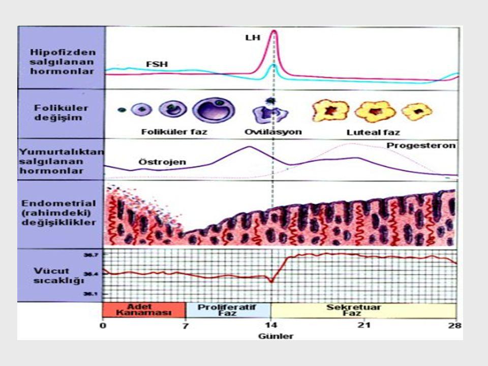 Foliküler faz Siklusun ilk günü ovariyel foliküller FSH'ya cevap vermeye ve gelişmeye başlar.