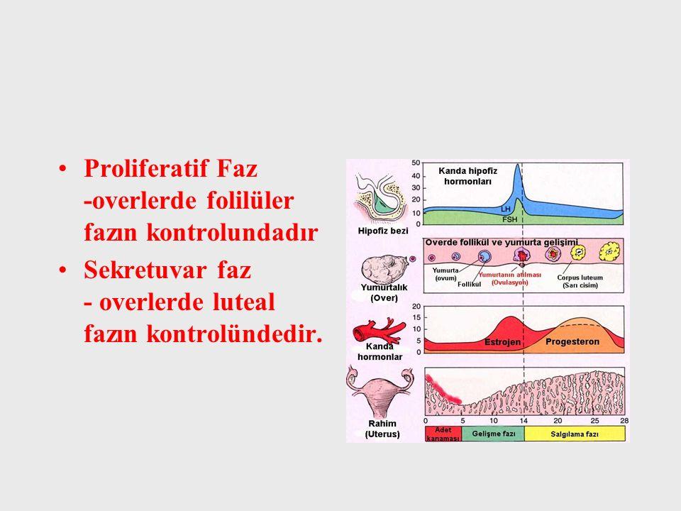 Proliferatif Faz -overlerde folilüler fazın kontrolundadır Sekretuvar faz - overlerde luteal fazın kontrolündedir.