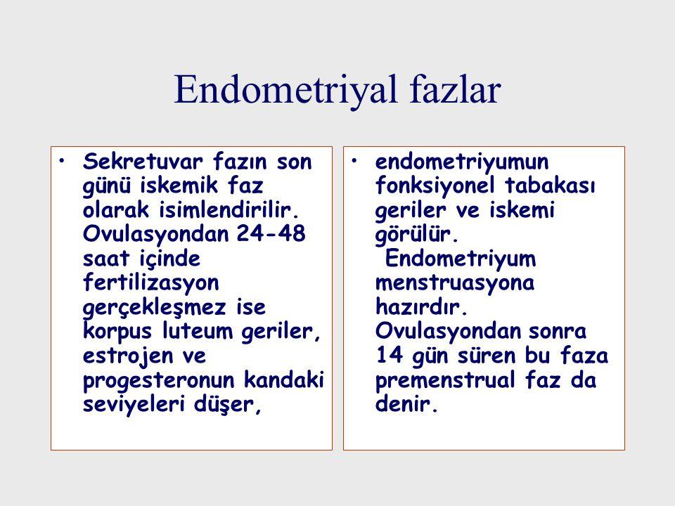 Endometriyal fazlar Sekretuvar fazın son günü iskemik faz olarak isimlendirilir. Ovulasyondan 24-48 saat içinde fertilizasyon gerçekleşmez ise korpus
