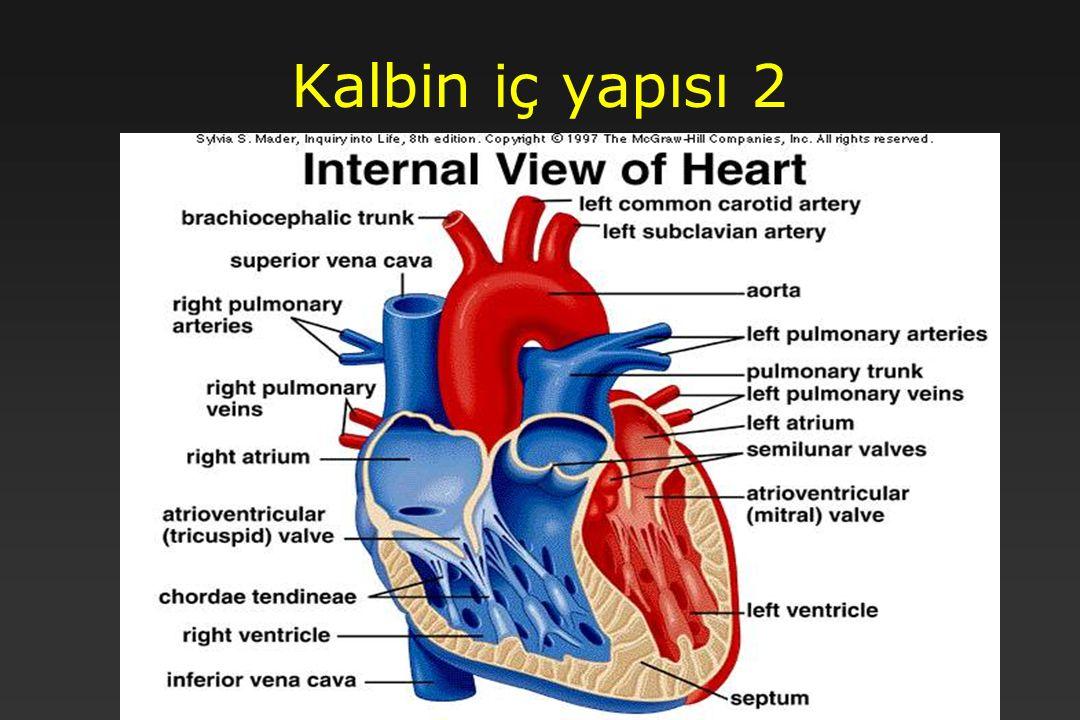 11 Kalbin iç yapısı 2
