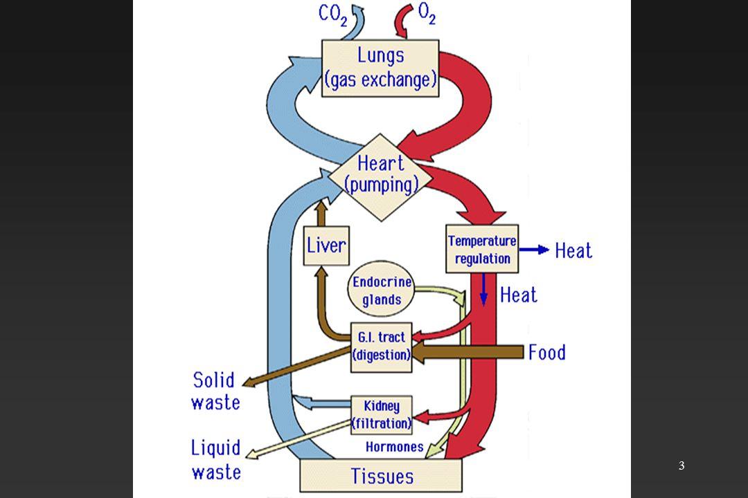 4 Kardio-vasküler sistem