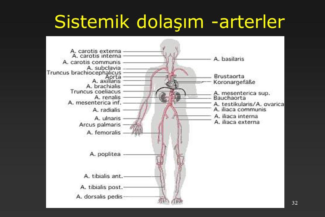 32 Sistemik dolaşım -arterler