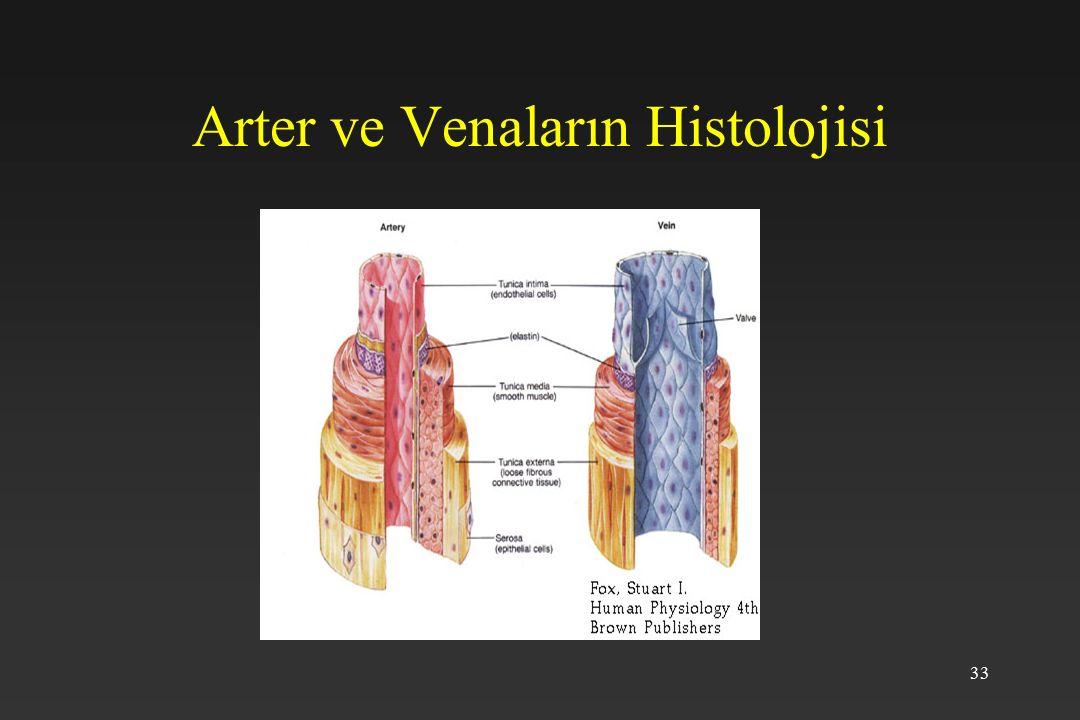 33 Arter ve Venaların Histolojisi