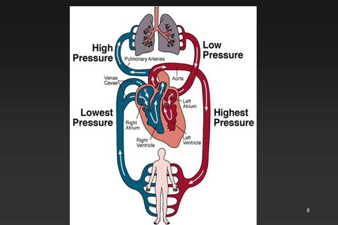 9 Kalbin dış yapısı