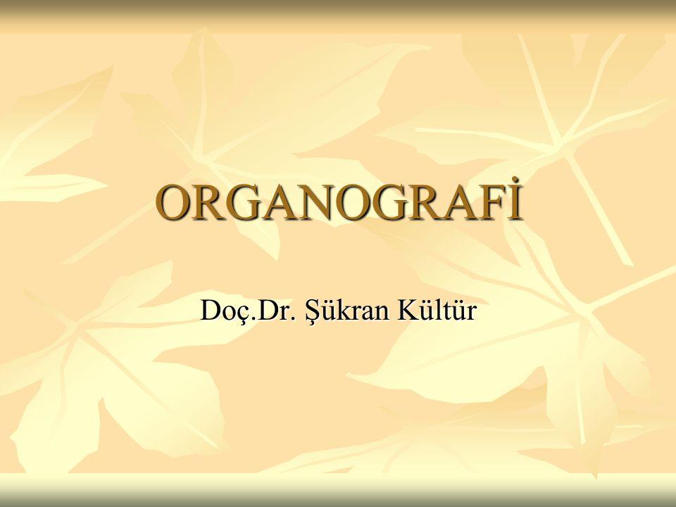 ORGANOGRAFİ Doç.Dr. Şükran Kültür