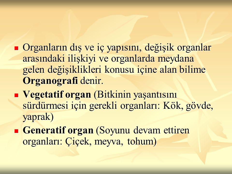 Organların dış ve iç yapısını, değişik organlar arasındaki ilişkiyi ve organlarda meydana gelen değişiklikleri konusu içine alan bilime Organografi denir.