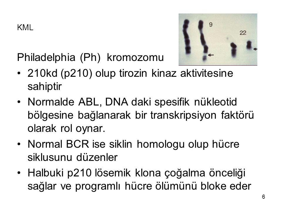 6 KML Philadelphia (Ph) kromozomu 210kd (p210) olup tirozin kinaz aktivitesine sahiptir Normalde ABL, DNA daki spesifik nükleotid bölgesine bağlanarak bir transkripsiyon faktörü olarak rol oynar.