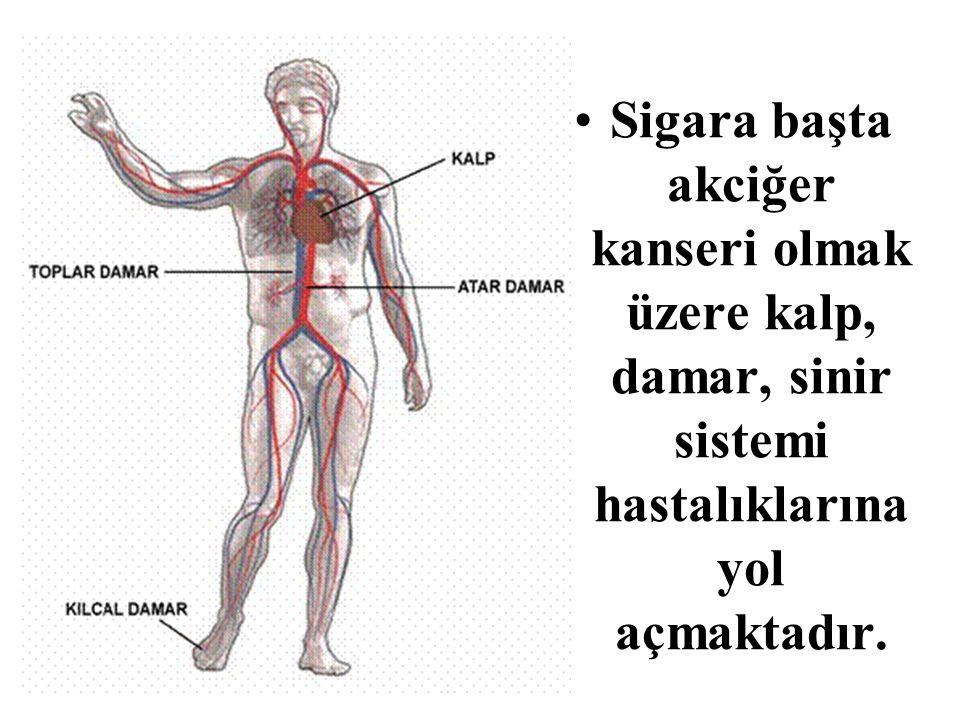 Sigara başta akciğer kanseri olmak üzere kalp, damar, sinir sistemi hastalıklarına yol açmaktadır.