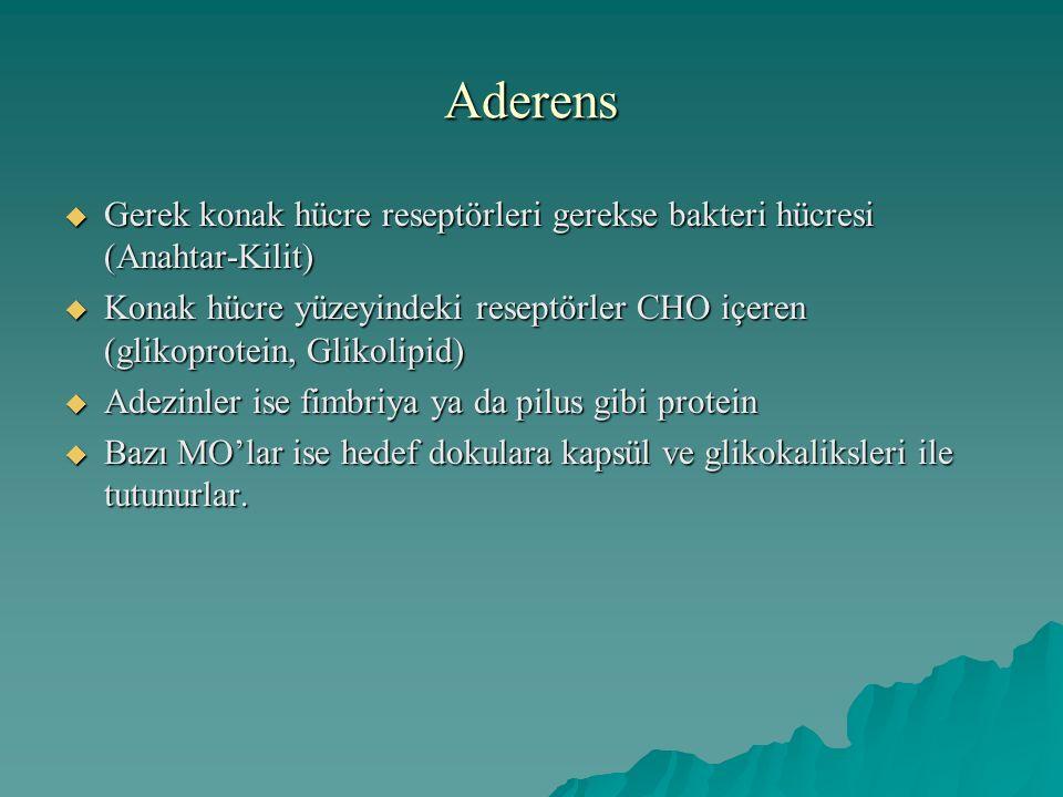 Aderens  Gerek konak hücre reseptörleri gerekse bakteri hücresi (Anahtar-Kilit)  Konak hücre yüzeyindeki reseptörler CHO içeren (glikoprotein, Gliko