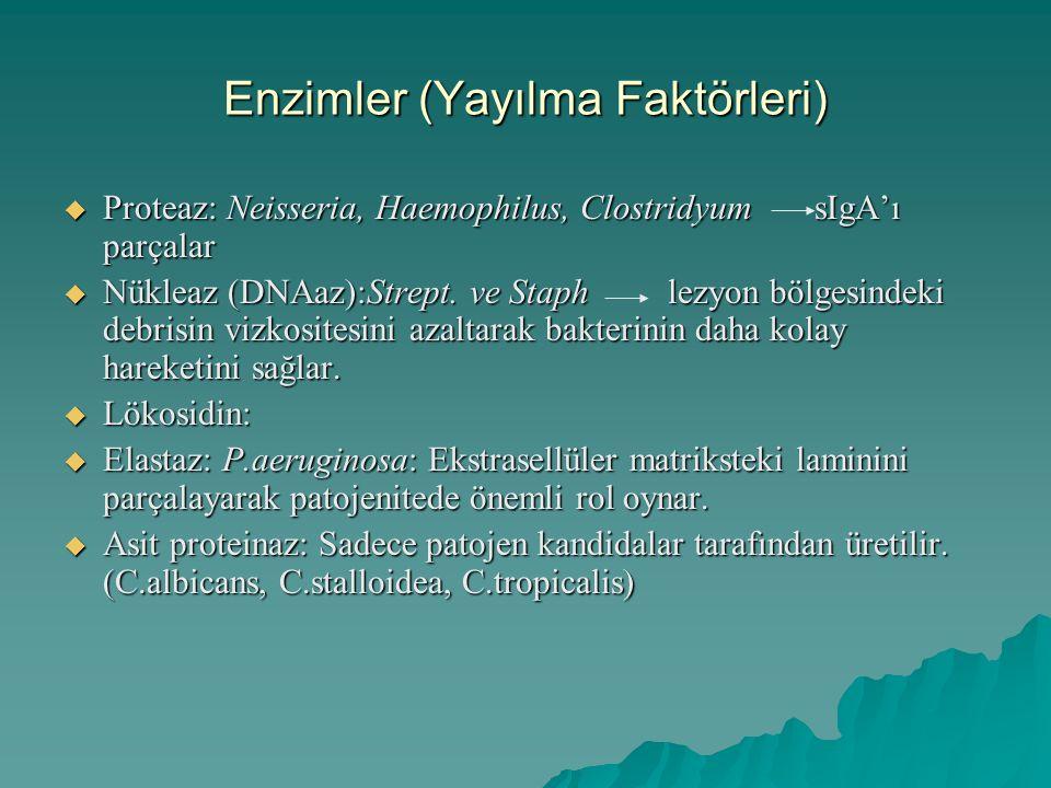 Enzimler (Yayılma Faktörleri)  Proteaz: Neisseria, Haemophilus, Clostridyum sIgA'ı parçalar  Nükleaz (DNAaz):Strept. ve Staph lezyon bölgesindeki de