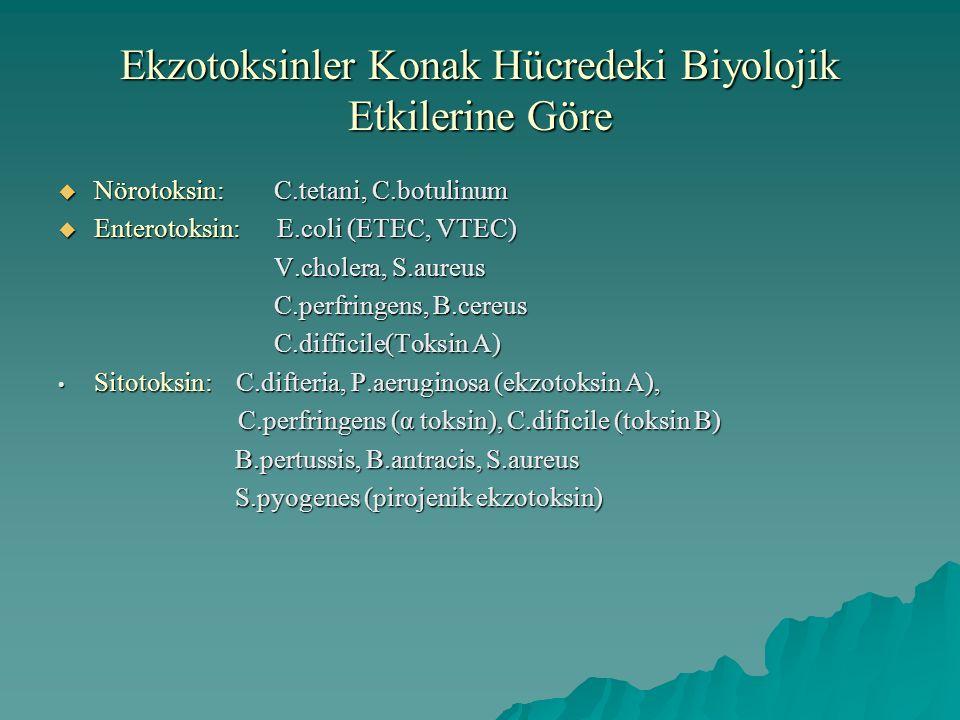 Ekzotoksinler Konak Hücredeki Biyolojik Etkilerine Göre  Nörotoksin: C.tetani, C.botulinum  Enterotoksin: E.coli (ETEC, VTEC) V.cholera, S.aureus C.