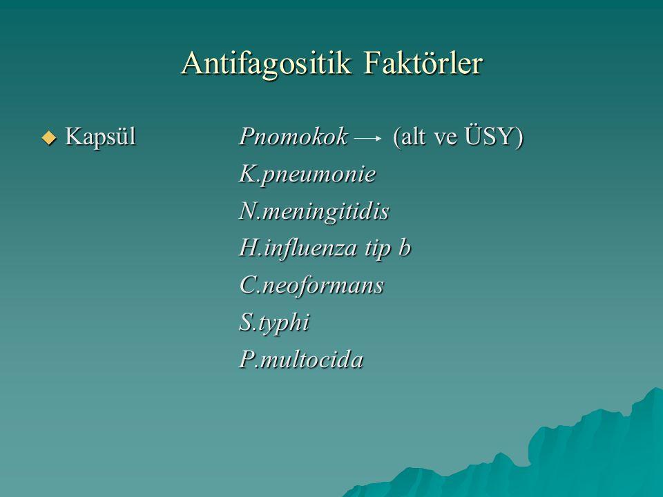 Antifagositik Faktörler  Kapsül Pnomokok (alt ve ÜSY) K.pneumonieN.meningitidis H.influenza tip b C.neoformansS.typhiP.multocida