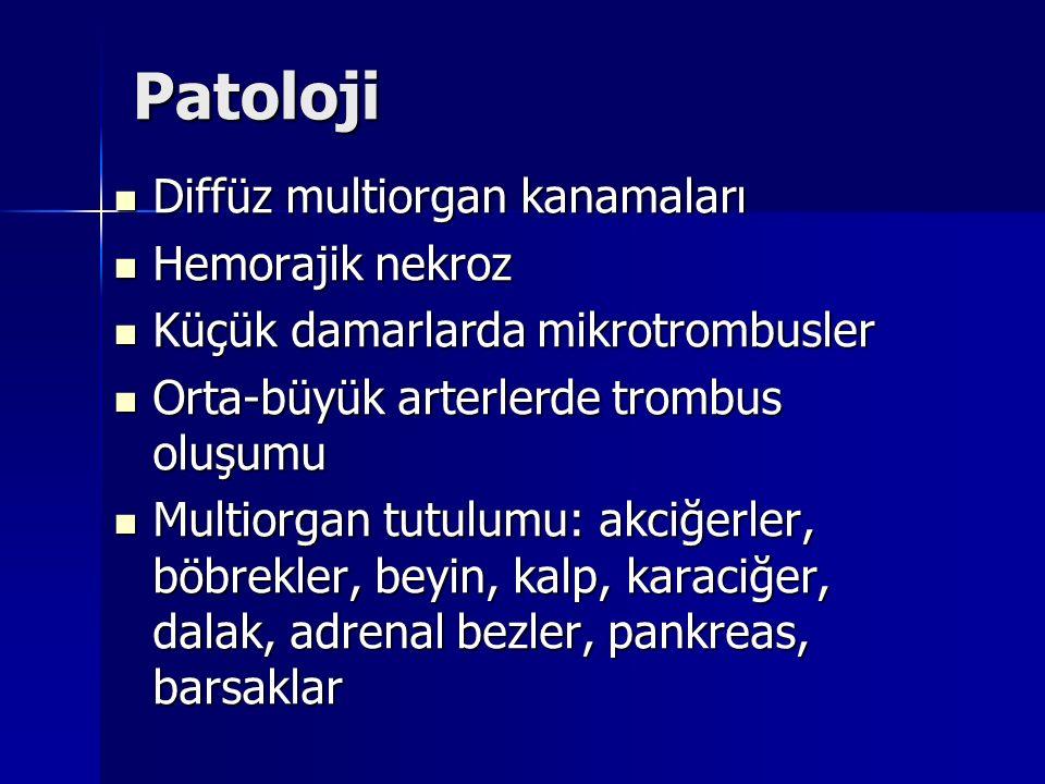Patoloji Diffüz multiorgan kanamaları Diffüz multiorgan kanamaları Hemorajik nekroz Hemorajik nekroz Küçük damarlarda mikrotrombusler Küçük damarlarda