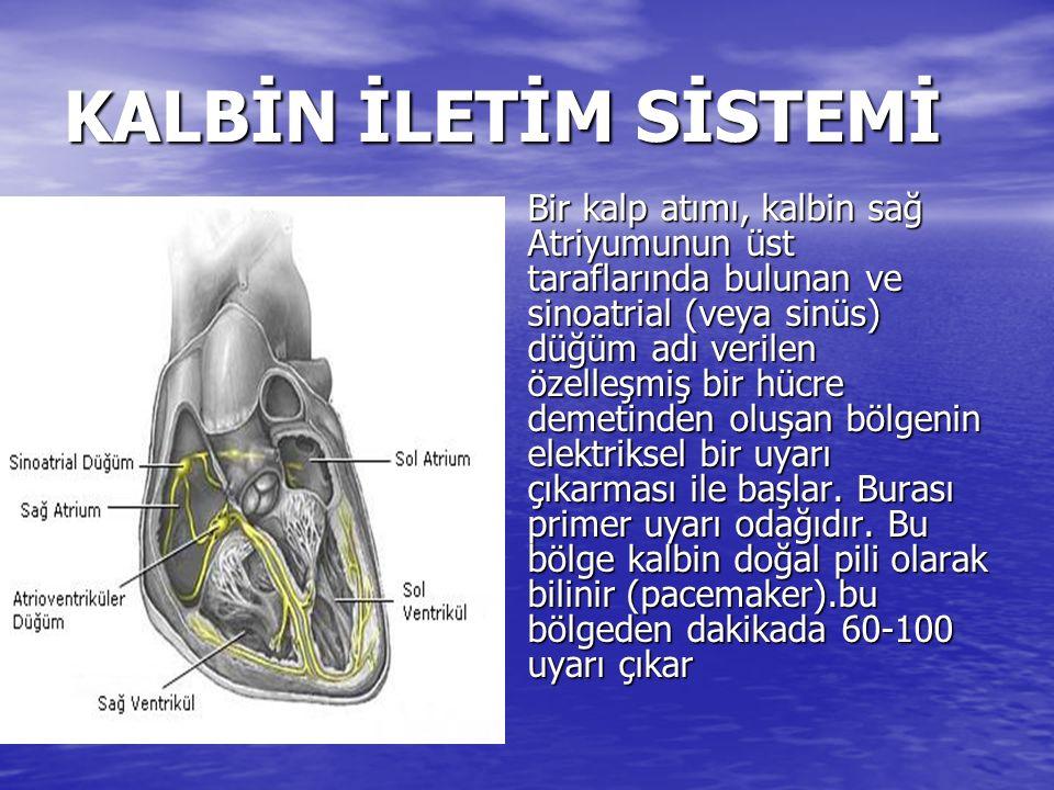 KALBİN İLETİM SİSTEMİ Bir kalp atımı, kalbin sağ Atriyumunun üst taraflarında bulunan ve sinoatrial (veya sinüs) düğüm adı verilen özelleşmiş bir hücre demetinden oluşan bölgenin elektriksel bir uyarı çıkarması ile başlar.