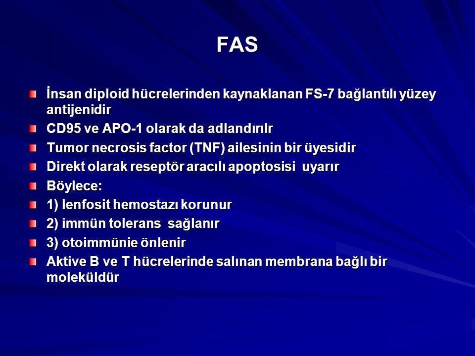 FAS İnsan diploid hücrelerinden kaynaklanan FS-7 bağlantılı yüzey antijenidir CD95 ve APO-1 olarak da adlandırılr Tumor necrosis factor (TNF) ailesinin bir üyesidir Direkt olarak reseptör aracılı apoptosisi uyarır Böylece: 1) lenfosit hemostazı korunur 2) immün tolerans sağlanır 3) otoimmünie önlenir Aktive B ve T hücrelerinde salınan membrana bağlı bir moleküldür