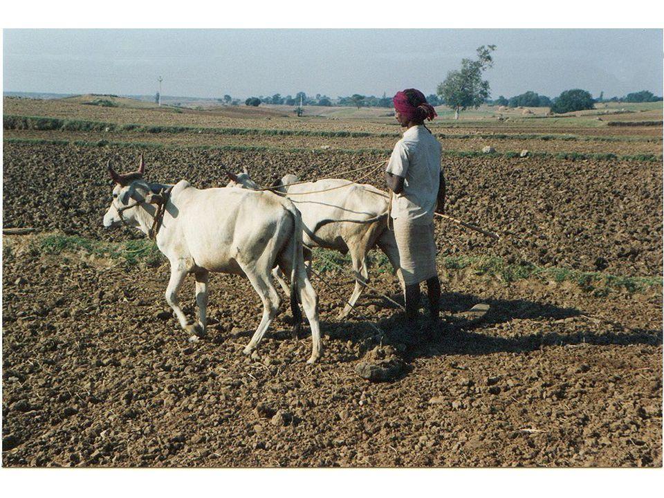 Atıkların Tarım alanlarında kullanımını etkileyen faktörler –Tarım şekli (tarım sistemi, kırsal yaşam biçimi, Bitki, hayvan); –ekonomi: pazar (üretilen ürün ve atık için); Alternatif değerlendirme şekli kullanılabilirlik; Taşıma maliyeti; Alternatif toprak iyileştiricilerin varlığı ve maliyeti;