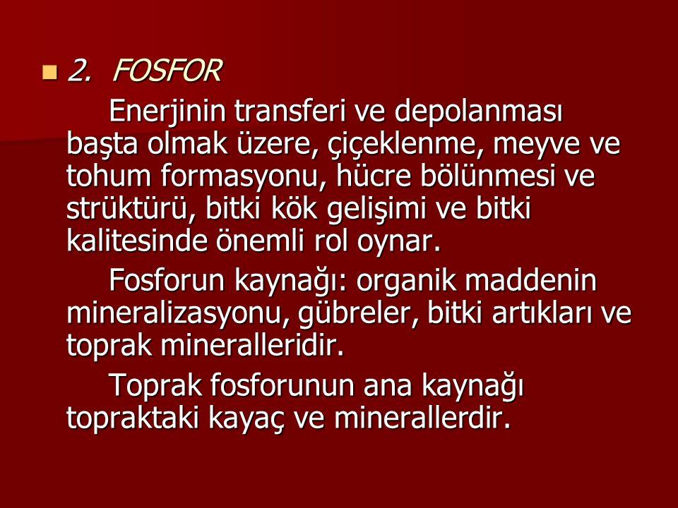 2. FOSFOR 2. FOSFOR Enerjinin transferi ve depolanması başta olmak üzere, çiçeklenme, meyve ve tohum formasyonu, hücre bölünmesi ve strüktürü, bitki k