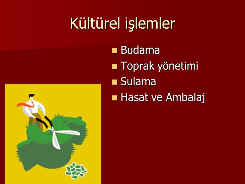 Kültürel işlemler Budama Budama Toprak yönetimi Toprak yönetimi Sulama Sulama Hasat ve Ambalaj Hasat ve Ambalaj