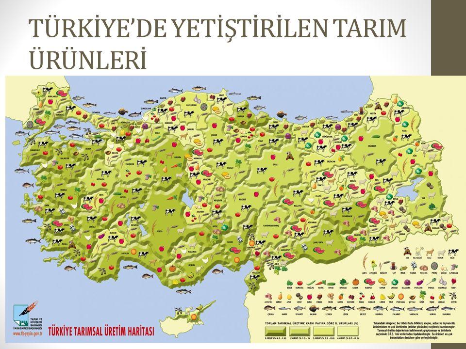 TÜRKİYE'DE YETİŞTİRİLEN TARIM ÜRÜNLERİ