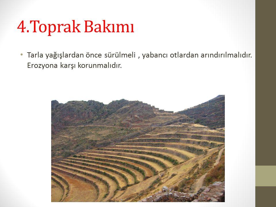 4.Toprak Bakımı Tarla yağışlardan önce sürülmeli, yabancı otlardan arındırılmalıdır.