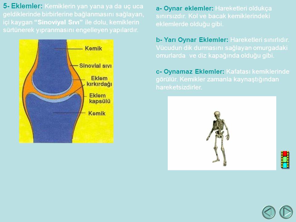 5- Eklemler: Kemiklerin yan yana ya da uç uca geldiklerinde birbirlerine bağlanmasını sağlayan, içi kaygan Sinoviyal Sıvı ile dolu, kemiklerin sürtünerek yıpranmasını engelleyen yapılardır.