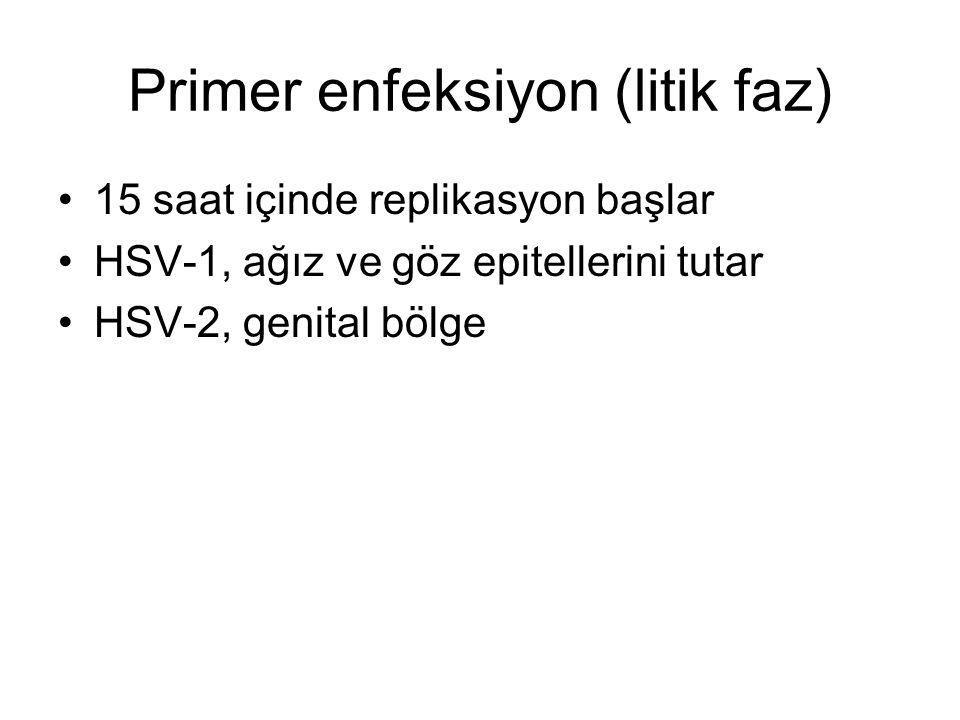 Primer enfeksiyon (litik faz) 15 saat içinde replikasyon başlar HSV-1, ağız ve göz epitellerini tutar HSV-2, genital bölge