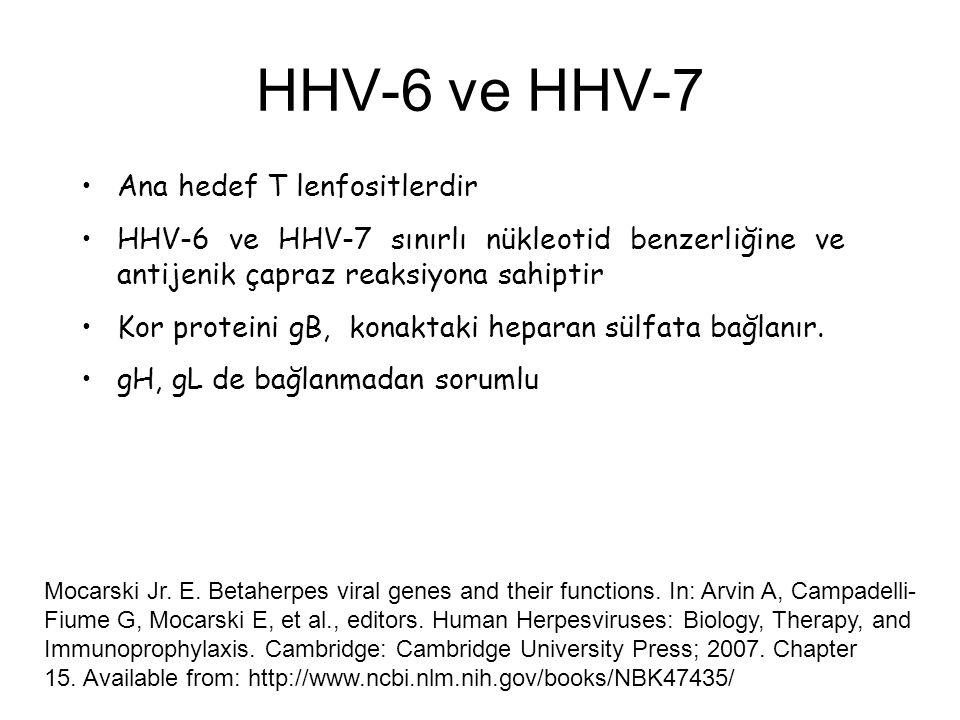 HHV-6 ve HHV-7 Ana hedef T lenfositlerdir HHV-6 ve HHV-7 sınırlı nükleotid benzerliğine ve antijenik çapraz reaksiyona sahiptir Kor proteini gB, konak