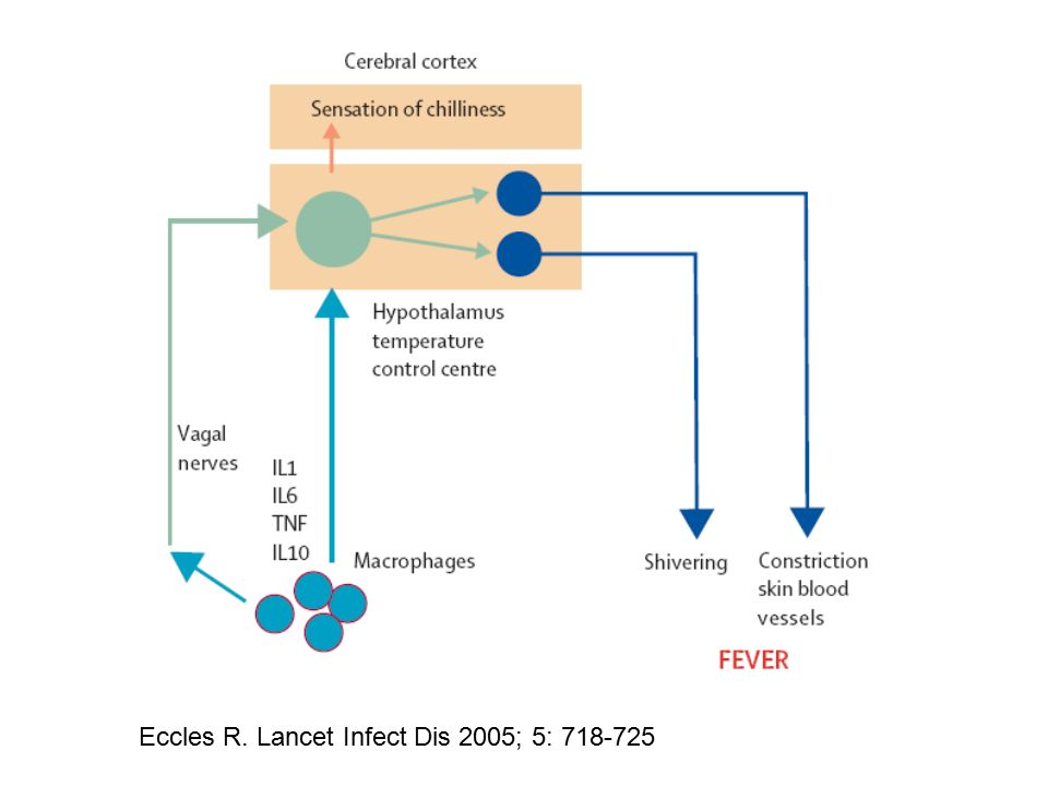 Eccles R. Lancet Infect Dis 2005; 5: 718-725
