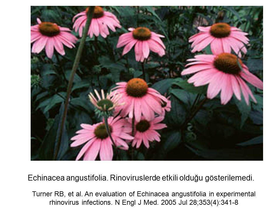 Echinacea angustifolia. Rinoviruslerde etkili olduğu gösterilemedi. Turner RB, et al. An evaluation of Echinacea angustifolia in experimental rhinovir