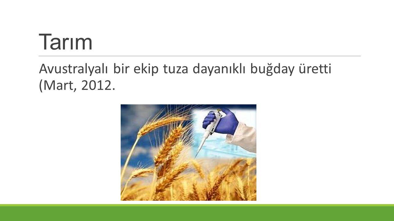 Tarım Avustralyalı bir ekip tuza dayanıklı buğday üretti (Mart, 2012.
