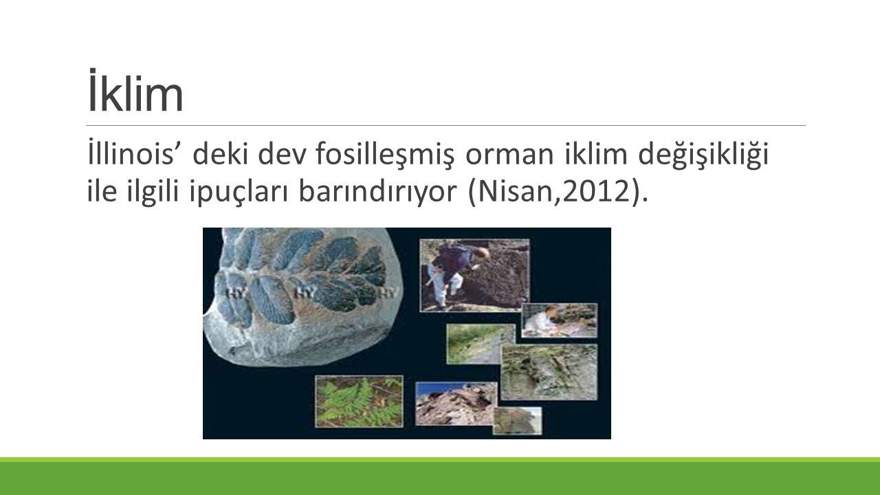 İklim İllinois' deki dev fosilleşmiş orman iklim değişikliği ile ilgili ipuçları barındırıyor (Nisan,2012).