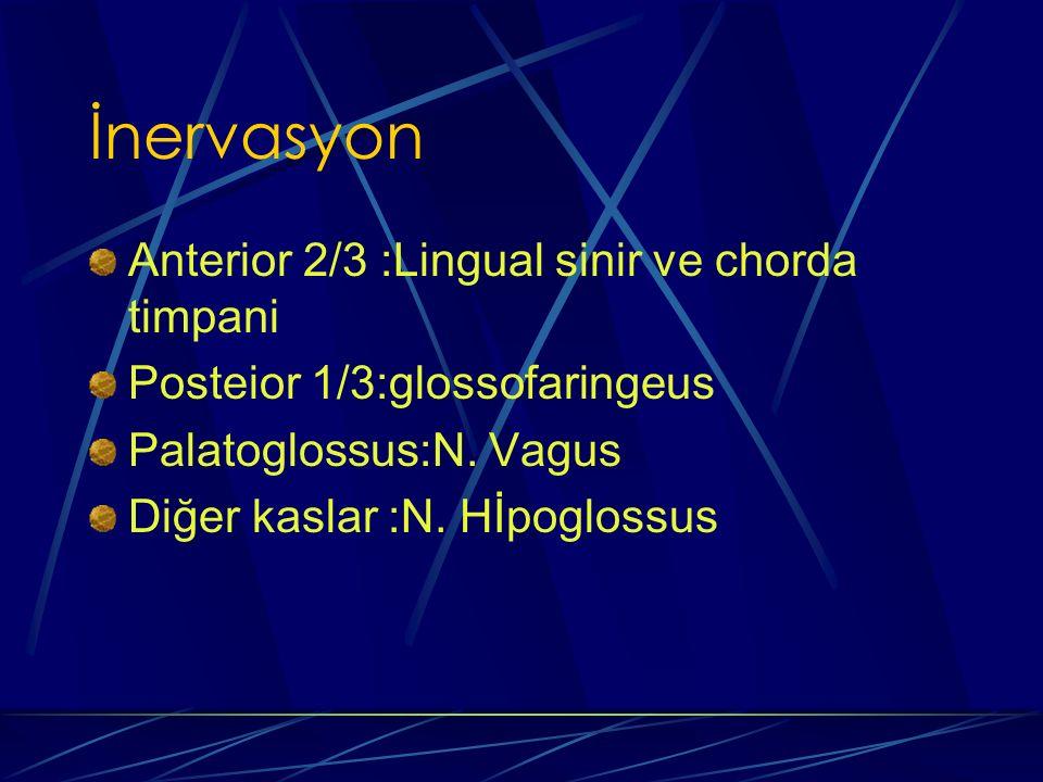 İnervasyon Anterior 2/3 :Lingual sinir ve chorda timpani Posteior 1/3:glossofaringeus Palatoglossus:N. Vagus Diğer kaslar :N. Hİpoglossus