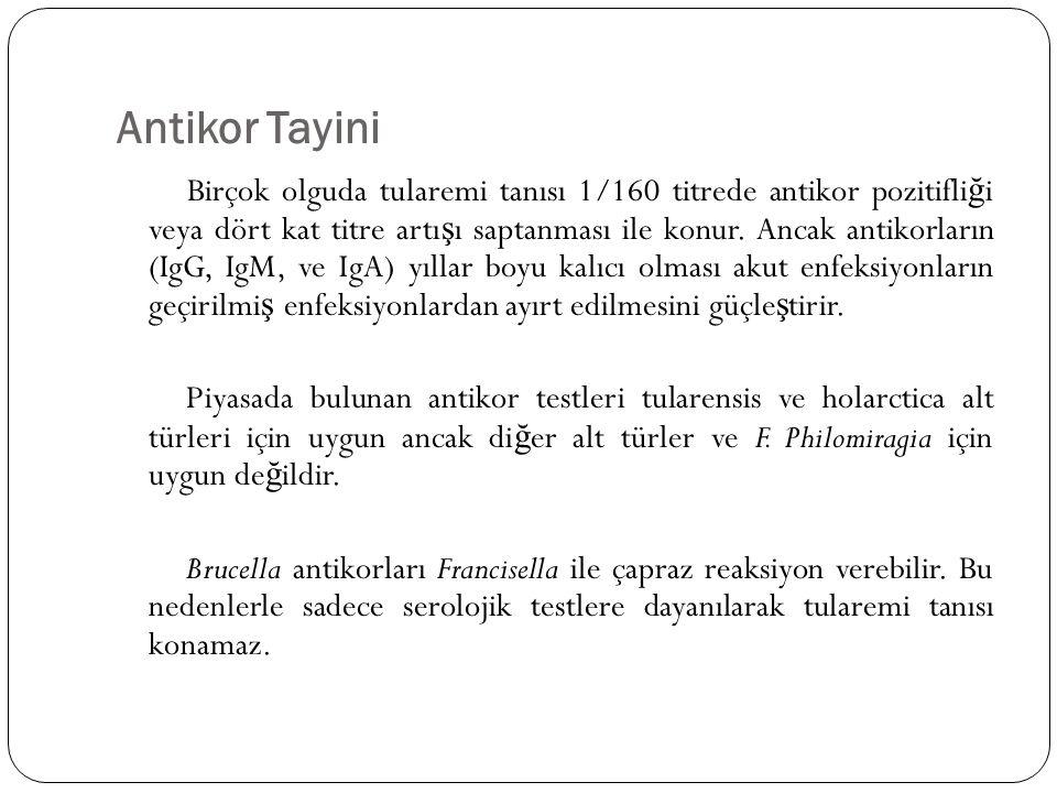 Antikor Tayini Birçok olguda tularemi tanısı 1/160 titrede antikor pozitifli ğ i veya dört kat titre artı ş ı saptanması ile konur. Ancak antikorların