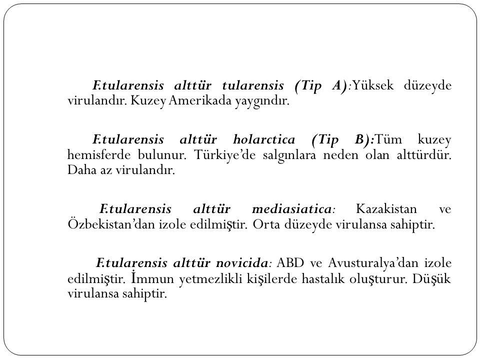 F.tularensis alttür tularensis (Tip A):Yüksek düzeyde virulandır. Kuzey Amerikada yaygındır. F.tularensis alttür holarctica (Tip B):Tüm kuzey hemisfer