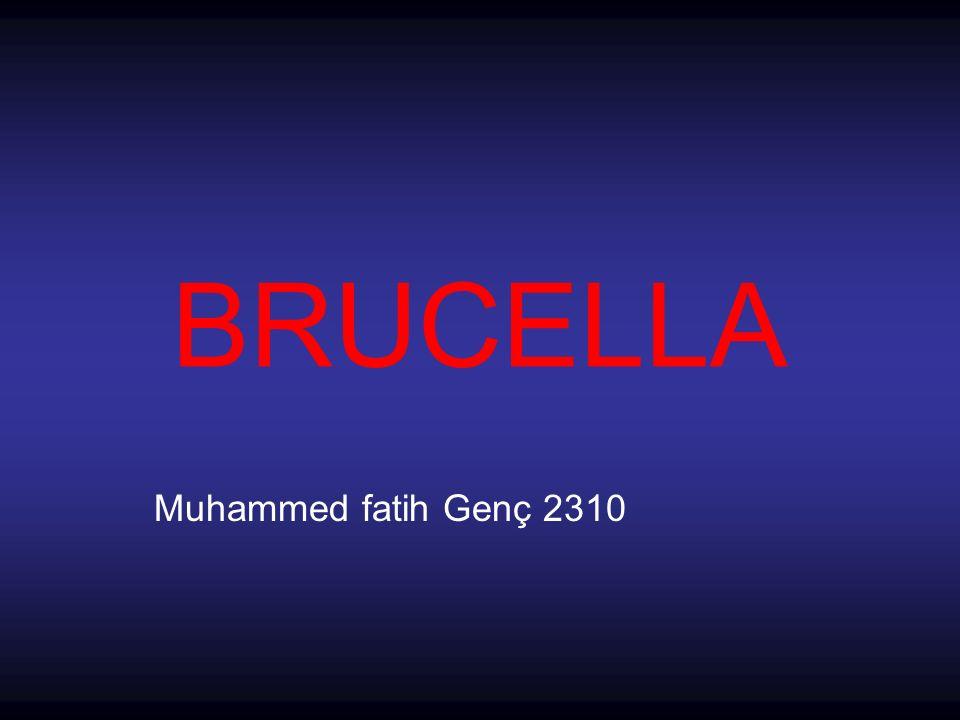 BRUCELLA Muhammed fatih Genç 2310