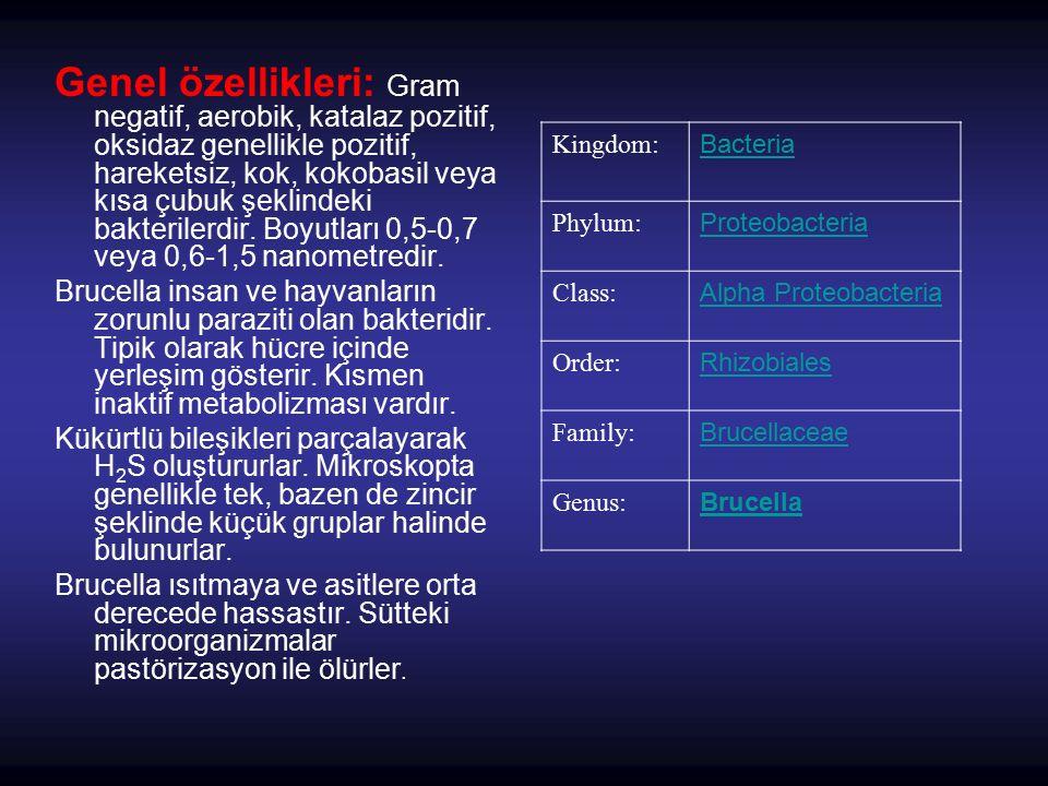 Kingdom: Bacteria Phylum: Proteobacteria Class: Alpha Proteobacteria Order: Rhizobiales Family: Brucellaceae Genus: Brucella Genel özellikleri: Gram n