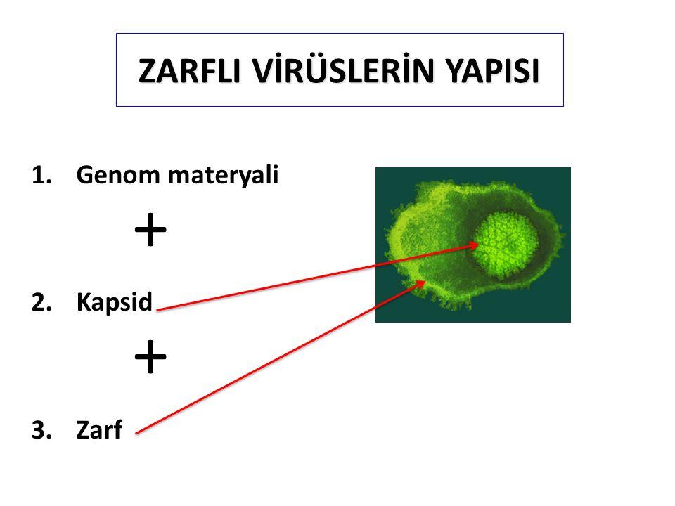 ZARFLI VİRÜSLERİN YAPISI 1.Genom materyali + 2.Kapsid + 3.Zarf